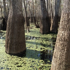 Bayou Sauvage National Wildlife Refuge