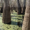 Bayou Sauvage National Wildlife Refuge New Orleans Louisiana United States