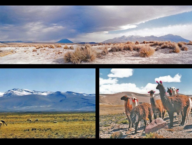 on the altiplano
