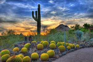 Things to Do: Desert Botanical Gardens