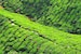 Drink in Malaysia's Tea-Growing Culture