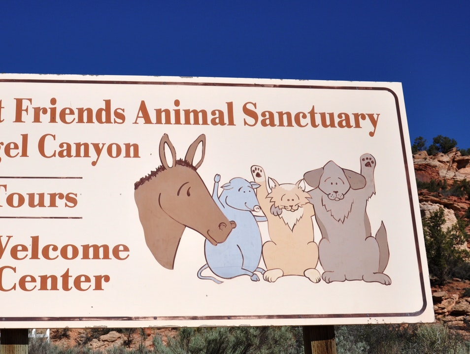 Utah's Best Friends Sanctuary: Find Your New Family Member Here Kanab Utah United States