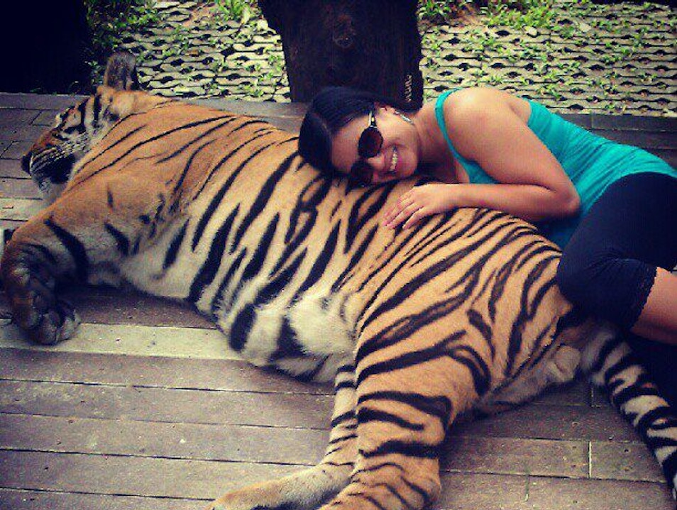 Spooning with a Tiger!  Rim Tai  Thailand