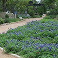Lady Bird Johnson Wildflower Center Austin Texas United States