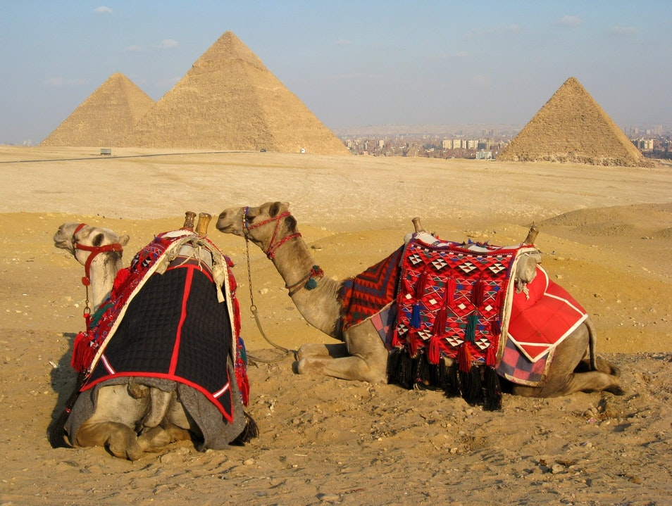 A camel ride to the Great Pyramid of Giza Cairo  Egypt