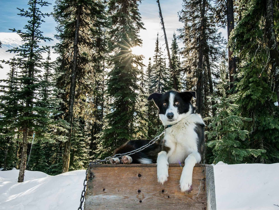Candle Creek Dog Sled Tours Beaverdell  Canada