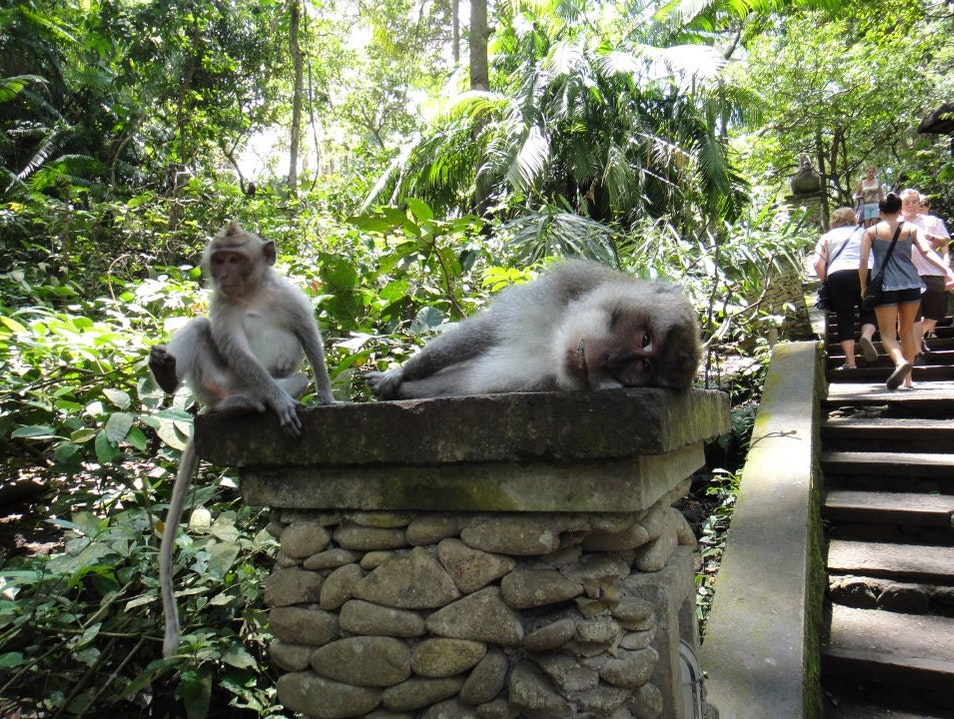 laying around Ubud  Indonesia
