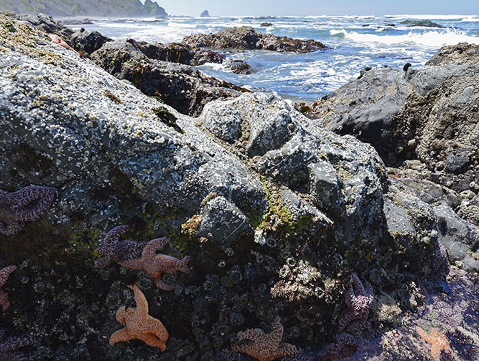 Endert's Beach and Tide Pools Crescent City California United States