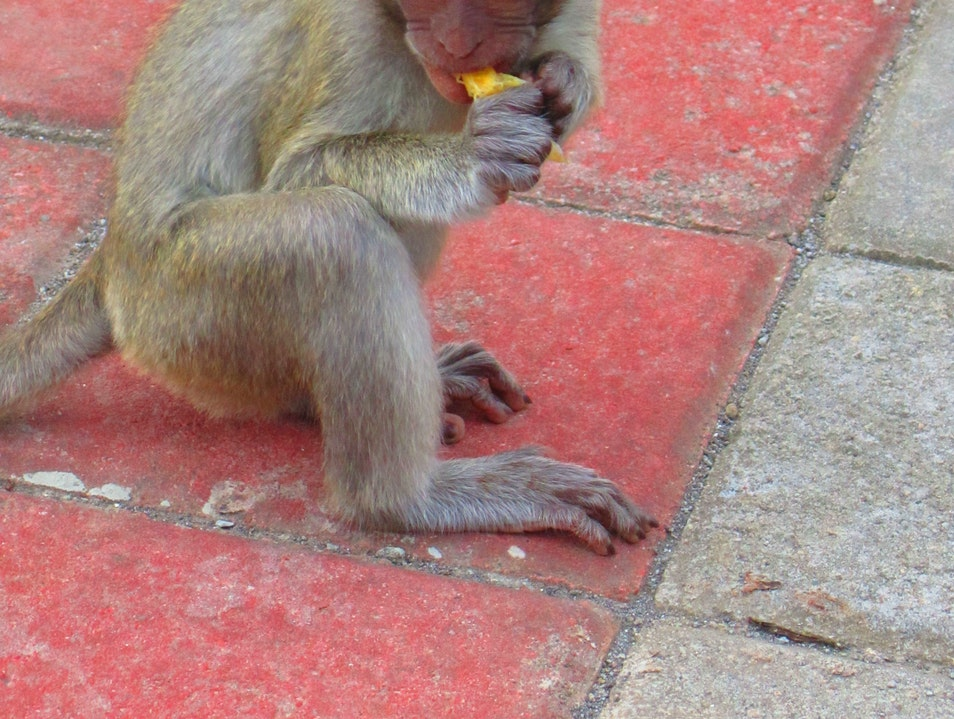 The Monkeys of Uluwatu Kuta  Indonesia