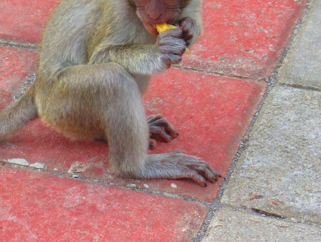 The Monkeys of Uluwatu