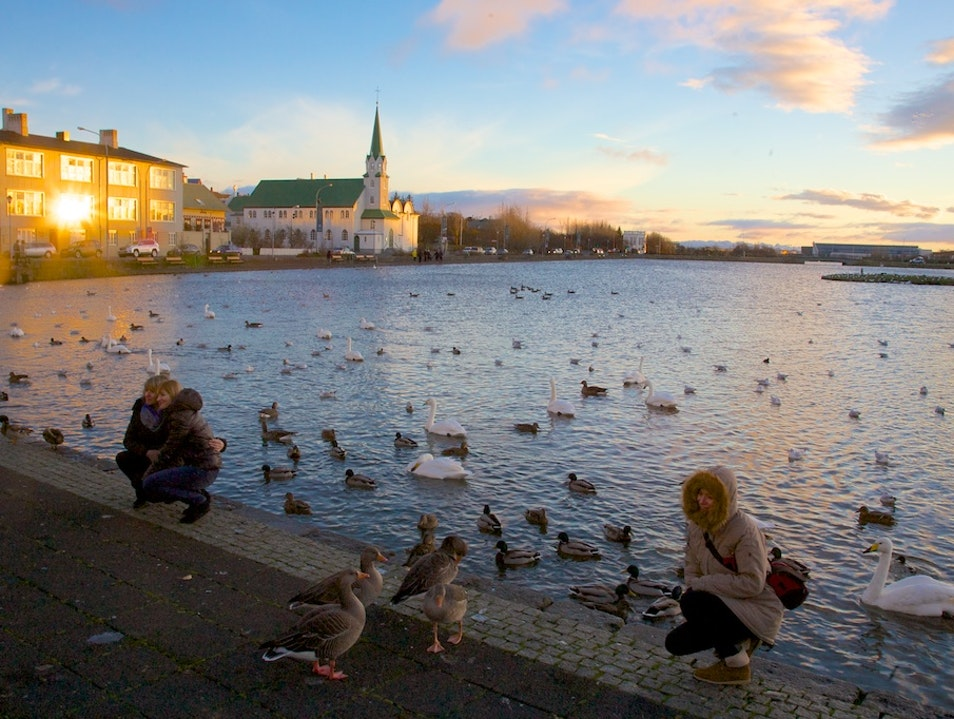 Feeding the Ducks at Tjörnin Reykjavik  Iceland