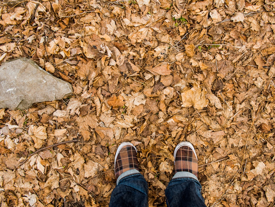 Kick up the Leaves Toronto  Canada