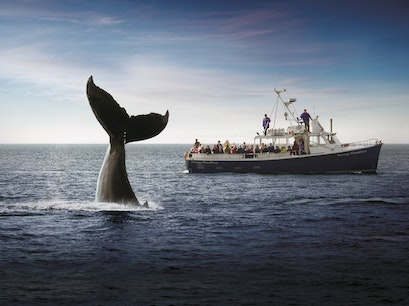 Whale-Watching in the Bay of Fundy Saint John  Canada