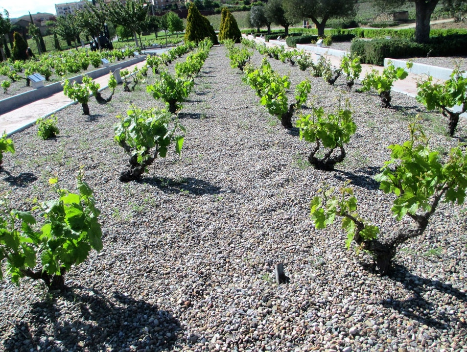 More than 200 varieties of grape plants are on display at Vivanco's Jardin de Baco (Garden of Bacchus)  Briones  Spain