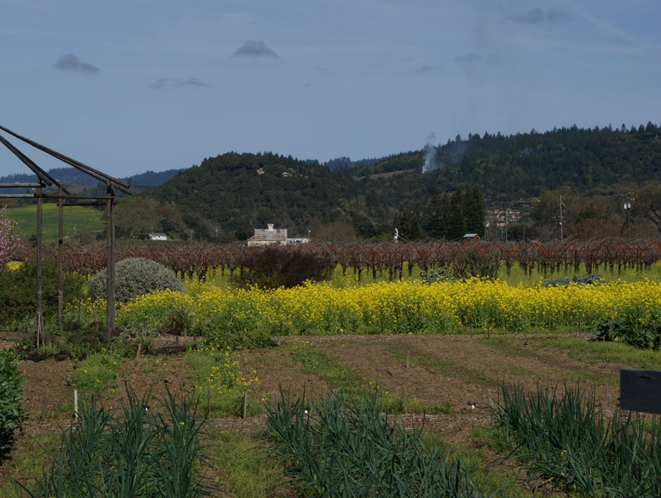Taste the Terroir at Frog's Leap Winery Rutherford California United States