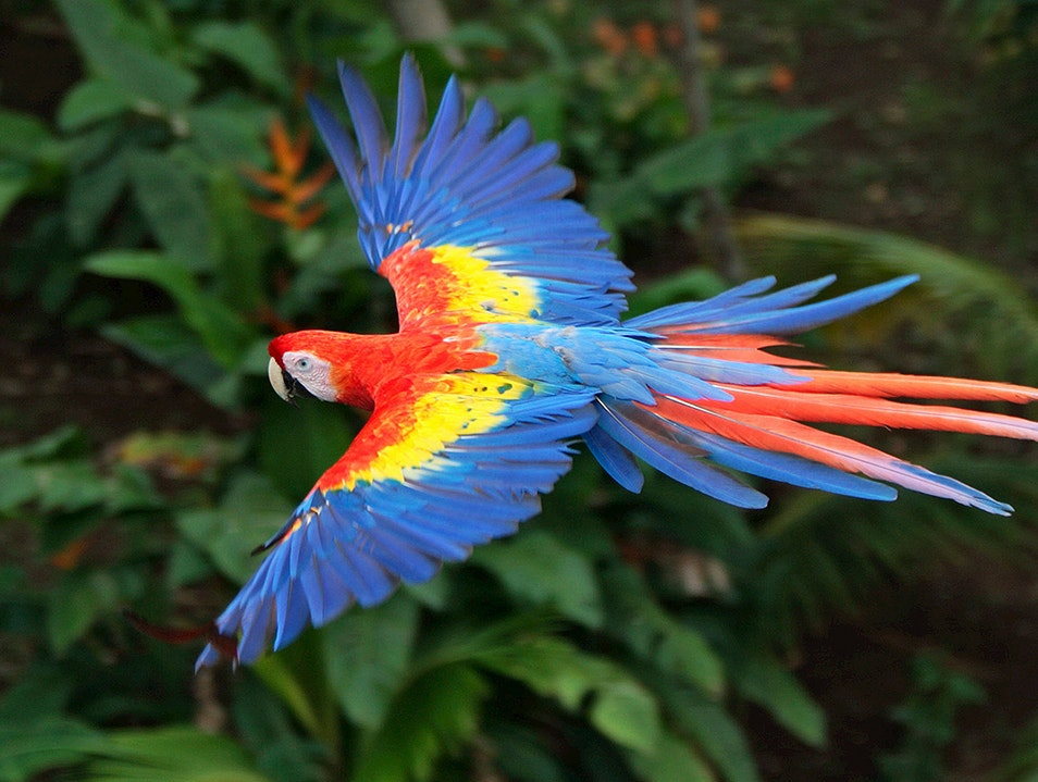National Aviary of Colombia Cartagena  Colombia