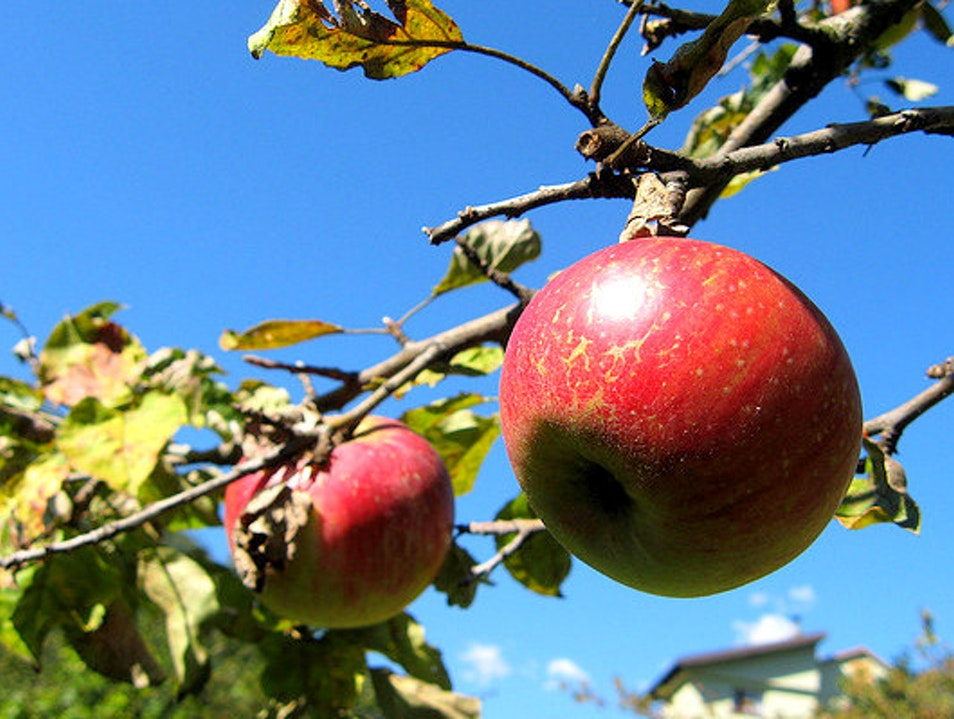 Day Trip to the Orchard St Bruno De Montarville  Canada