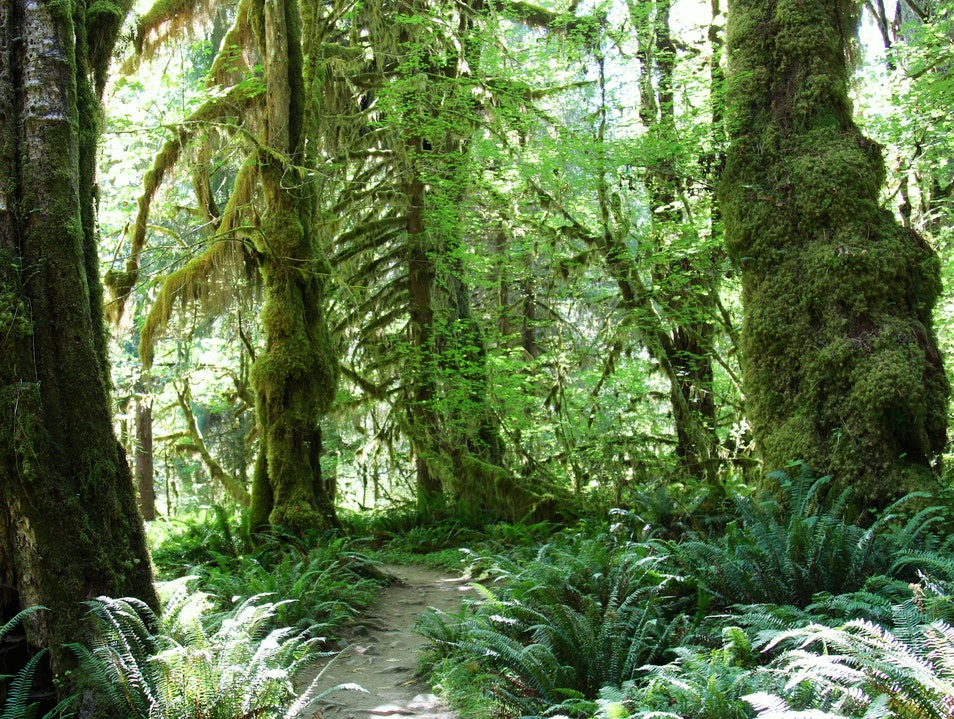 Hike the Hoh River Trail, Olympic National Park, WA Forks Washington United States