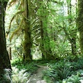 Hoh Rain Forest  Forks Washington United States