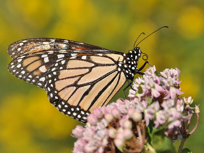 Learn about Plants and Butterflies at the Heritage Park