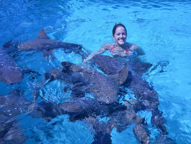 Swimming with Nurse Sharks at Compass Cay in Exumas, Bahamas