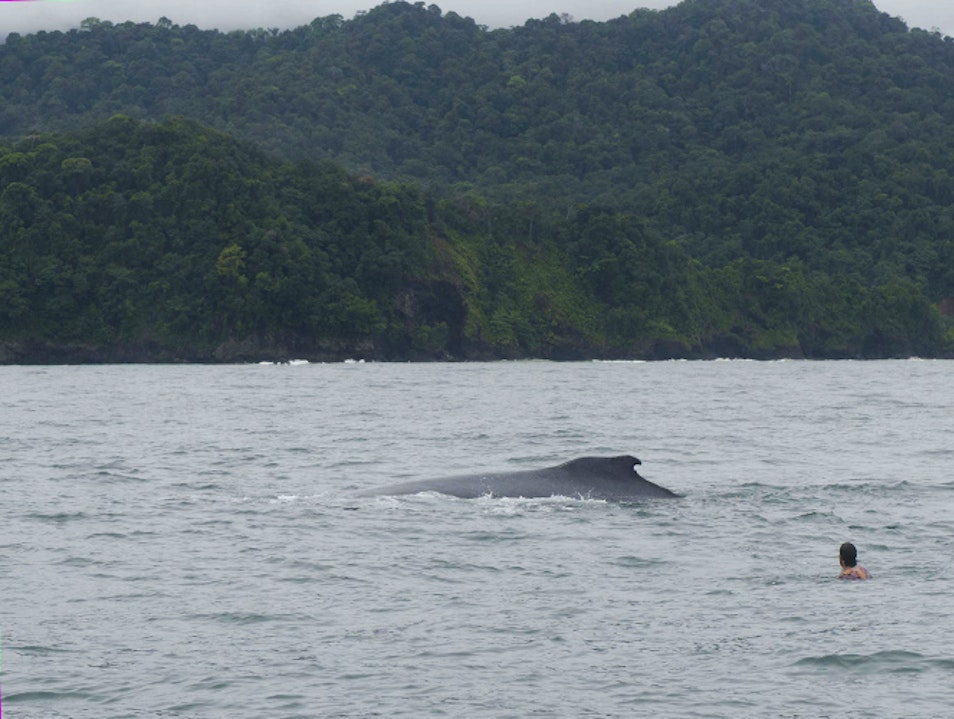 Pacific Whale-Watching: Bahía Solano and Nuquí Nuquí  Colombia