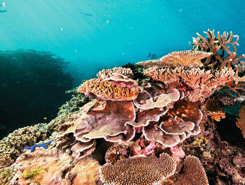 Coral Reefs and Islands Queensland  Australia