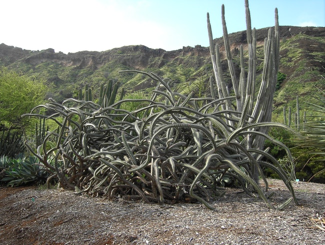 Easy Hike and Cool Cacti on Oahu