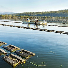 New South Wales Oyster Tours