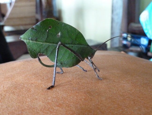 a leaf or insect?