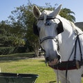 Amelia Island Carriages Fernandina Beach Florida United States