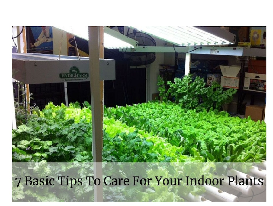 7 Basic Tips To Care For Your Indoor Plants Lahore  Pakistan