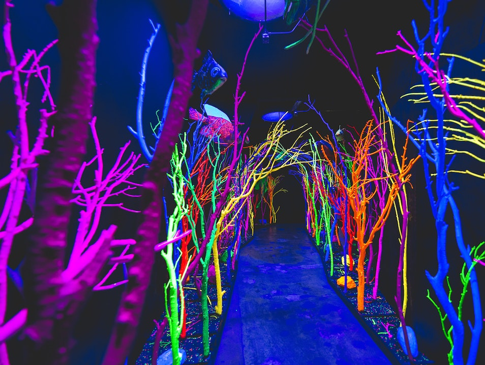 Explore the Electric Forest Santa Fe New Mexico United States