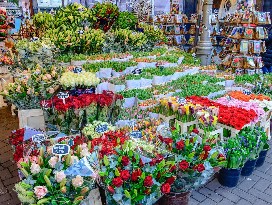 At the flower market Amsterdam  The Netherlands