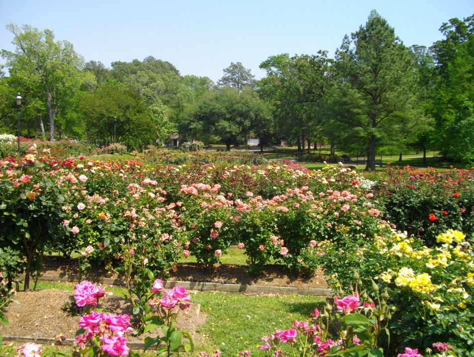 A Walk through the Roses Tyler Texas United States