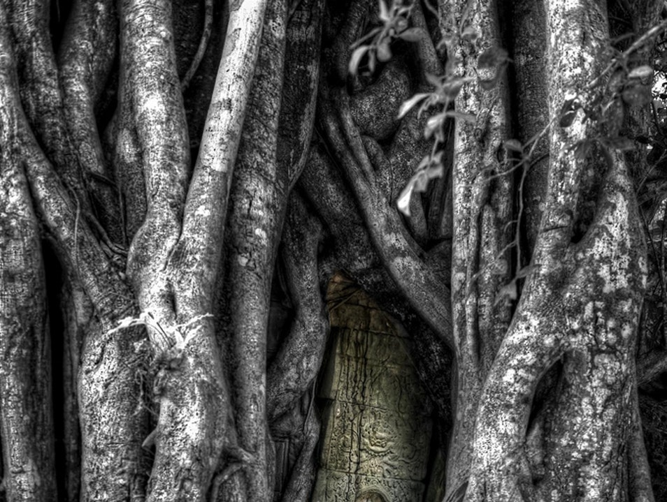 Entwined Theology