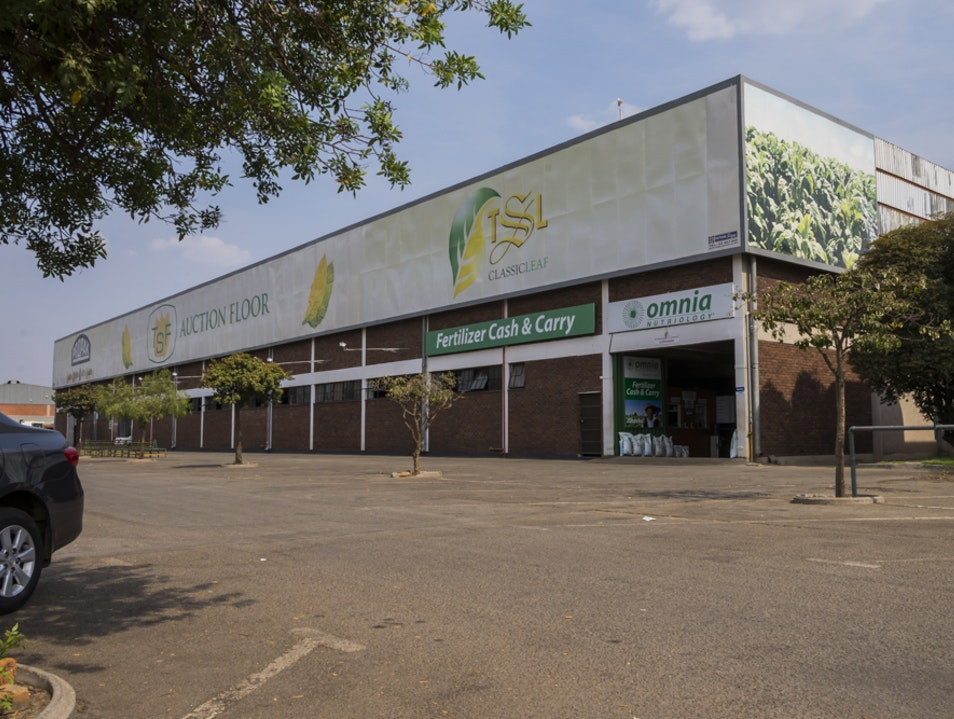 Visit the Tobacco Auction in Harare