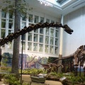 Carnegie Museums of Pittsburgh Pittsburgh Pennsylvania United States