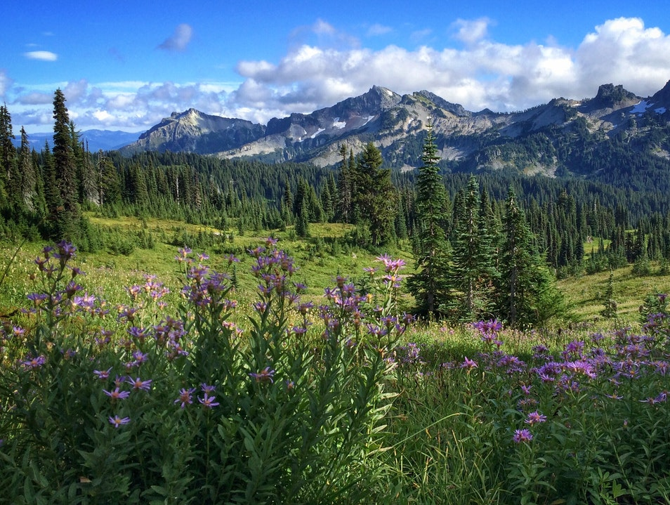 September in the Cascades: thinner crowds and lingering wildflowers Ashford Washington United States