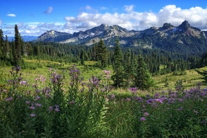 Tatoosh Range, WA