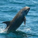 Dolphin and Sea Lion Tour