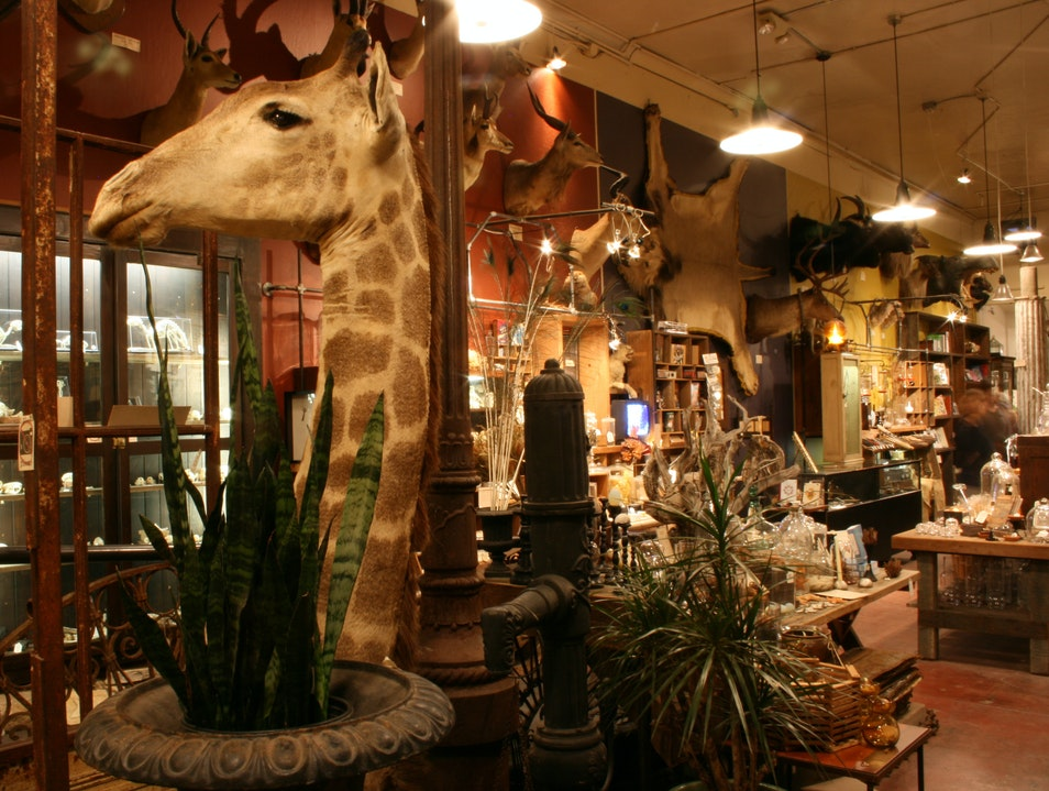 Shop for Natural Oddities at Paxton Gate in San Francisco