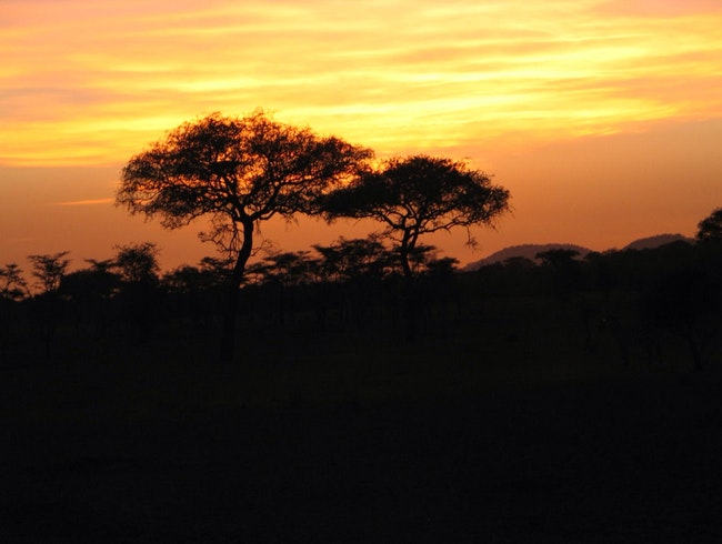 New Years Day-Sunrise On The Serengeti