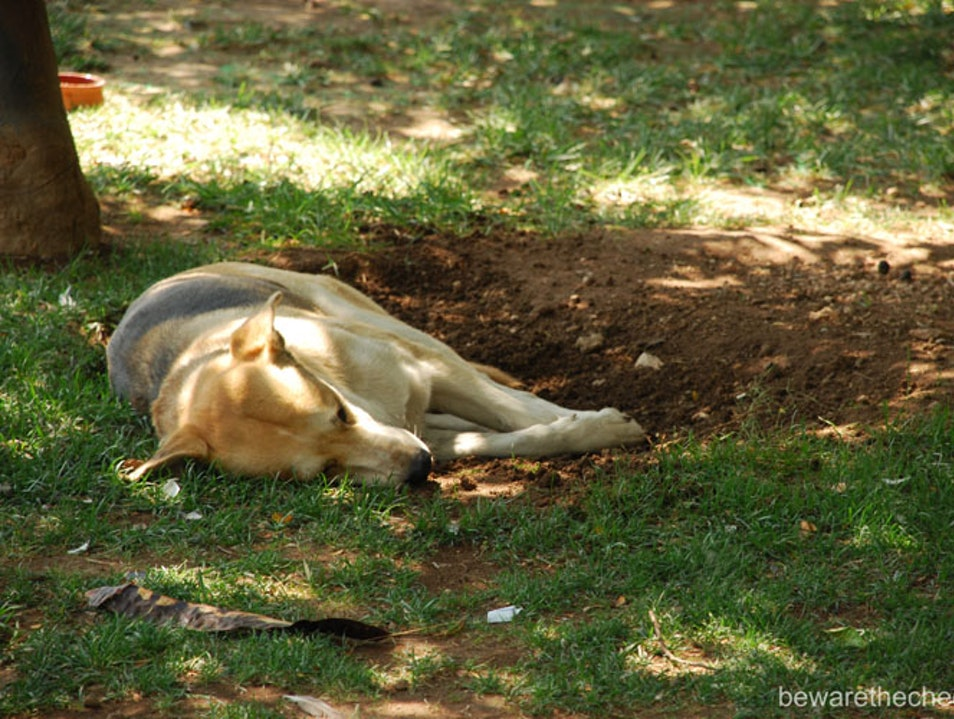 Athens Tips Part 14 - Stray dogs and cats Athens  Greece