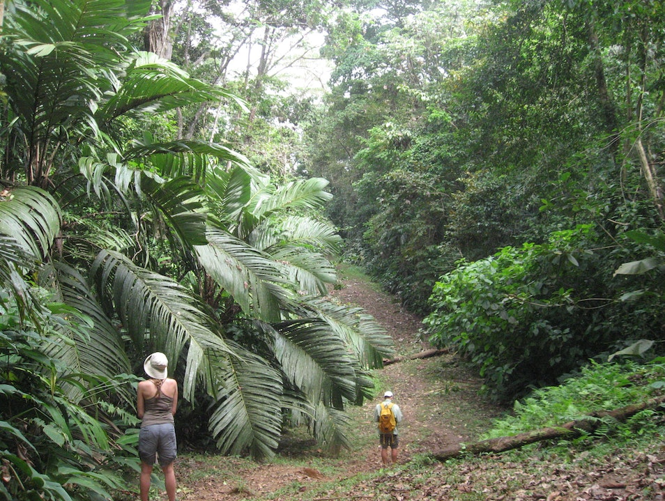 Hiking the Caribbean Jungle in the Gandoca Manzanillo National Wildlife Refuge Limon  Costa Rica