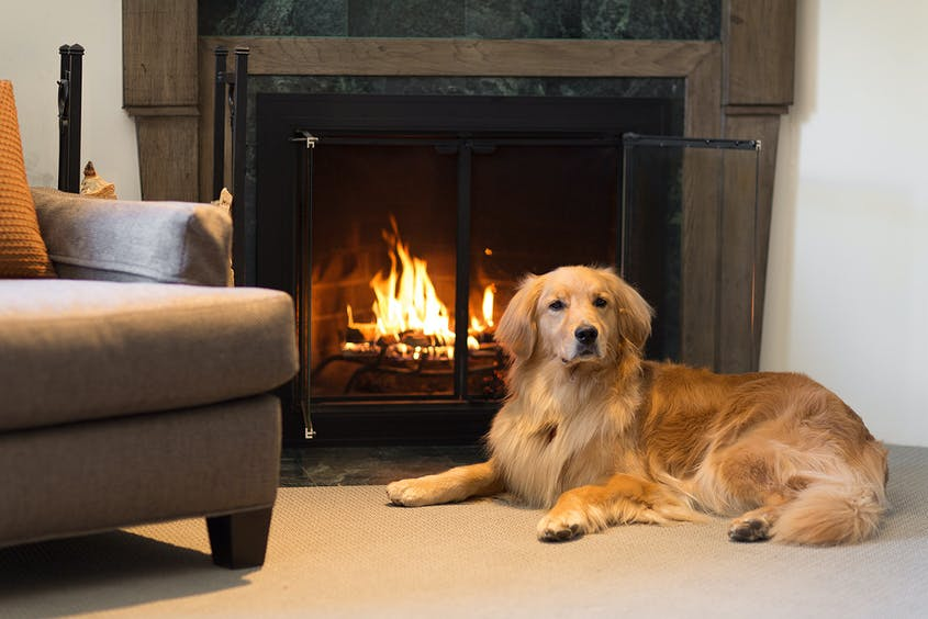 The cozy Knob Hill Inn welcomes families—and their dogs.