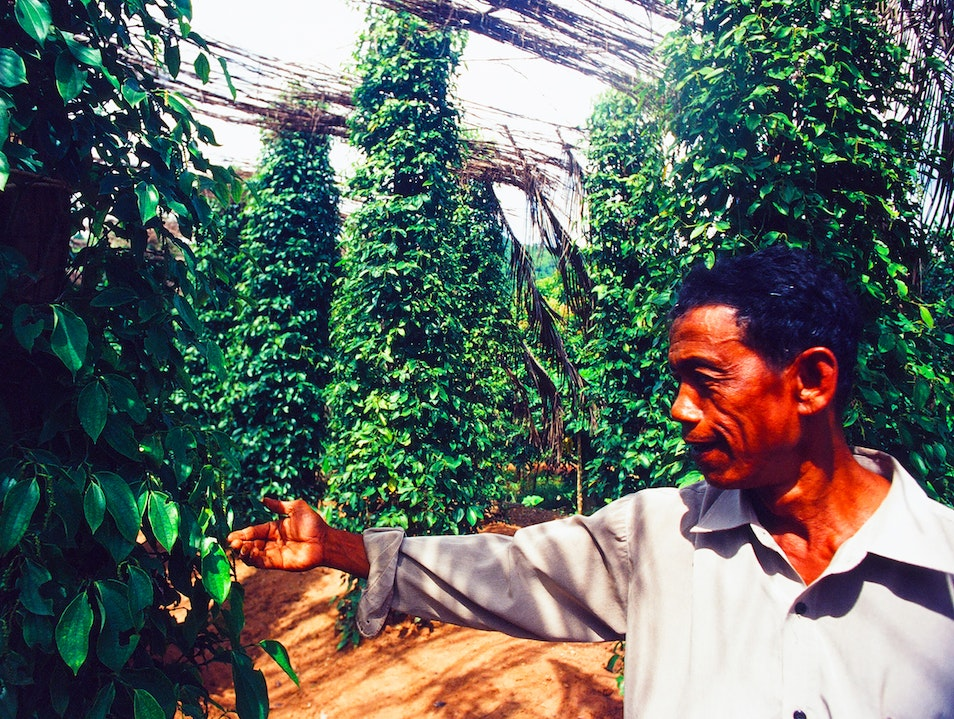 The Best Pepper in the World - Kampot, Cambodia