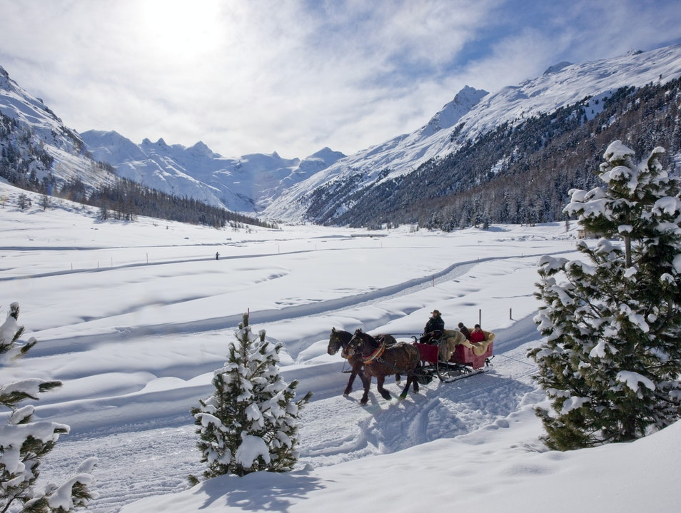 Snuggle Up in a Horse-Drawn Sleigh