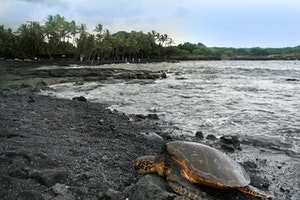 Punaluu County Beach Park