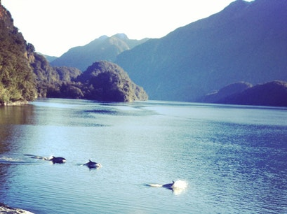 Doubtful Sound Daytime & Overnight Cruises Manapouri  New Zealand